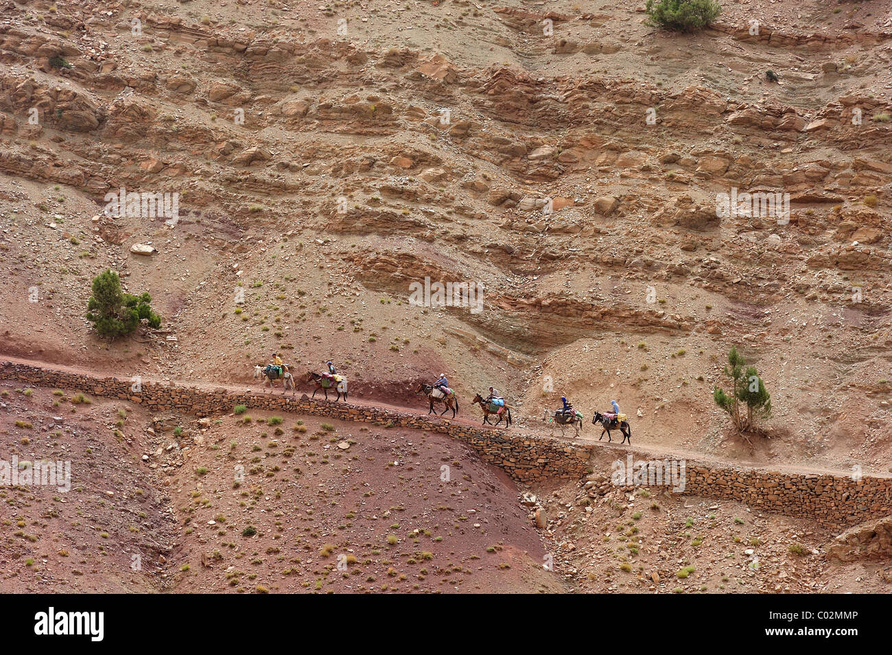 Travellers travelling with mules in the High Atlas Mountains, Ait Bouguemez, High Atlas, Morocco, Africa - Stock Image