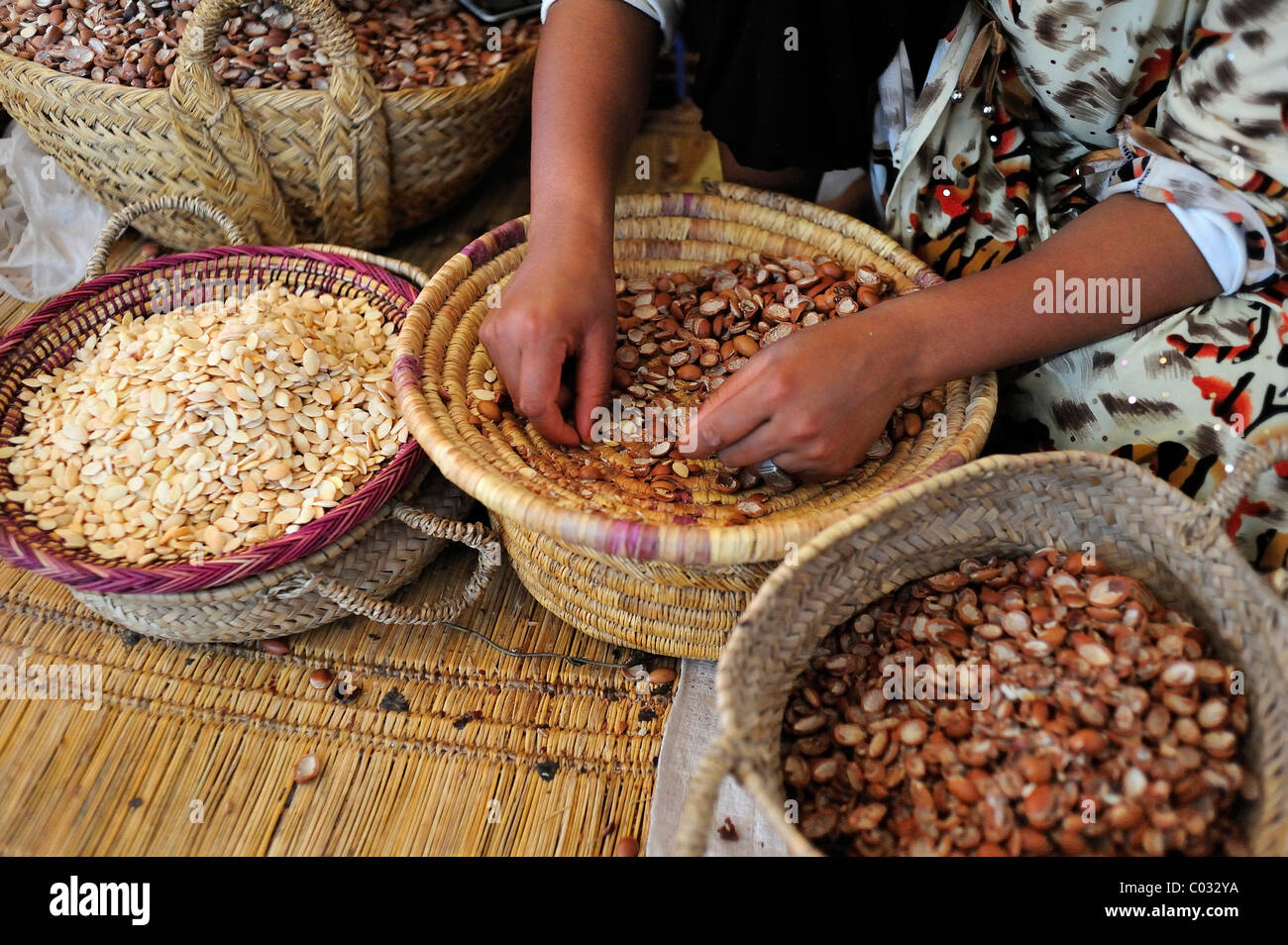 A woman sorting Argan seeds out of a bowl to press to gain Argan oil, South Morocco, Morocco, Africa - Stock Image