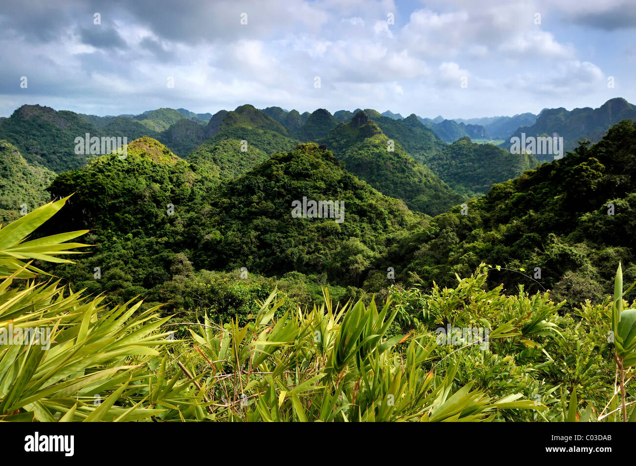 Cat Ba National Park, on the way to the Ngu Lam summit, Kim Giao forest, UNESCO biosphere reserve, Vietnam, Southeast - Stock Image