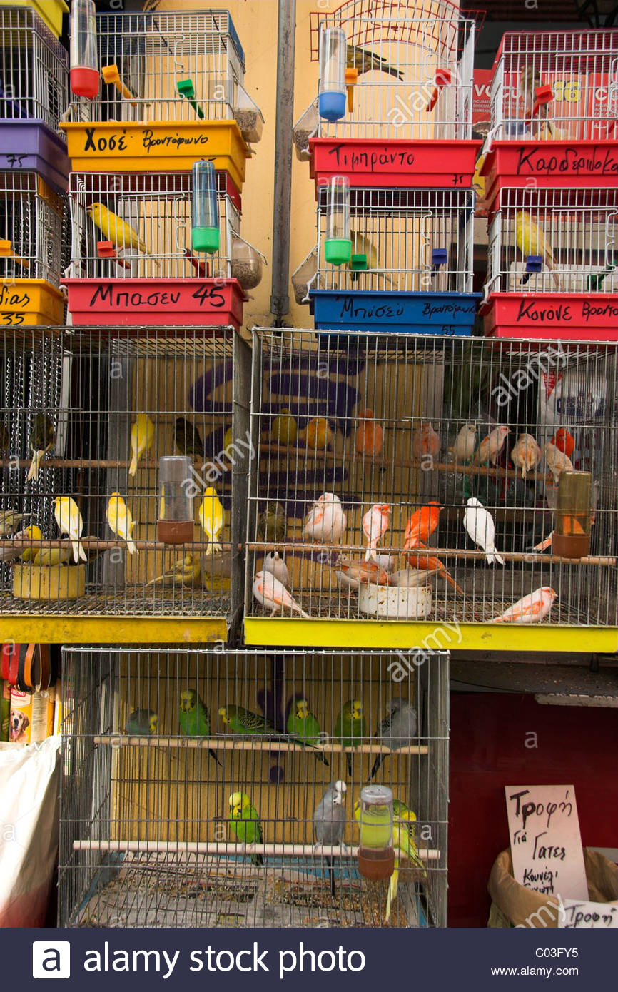 Birds for sale at a pet shop in Athens, Greece Stock Photo ...