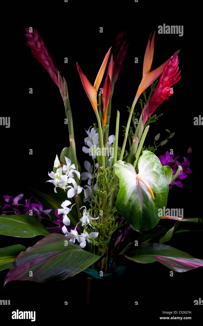 Tropical flower bouquet Stock Photo: 34499349 - Alamy