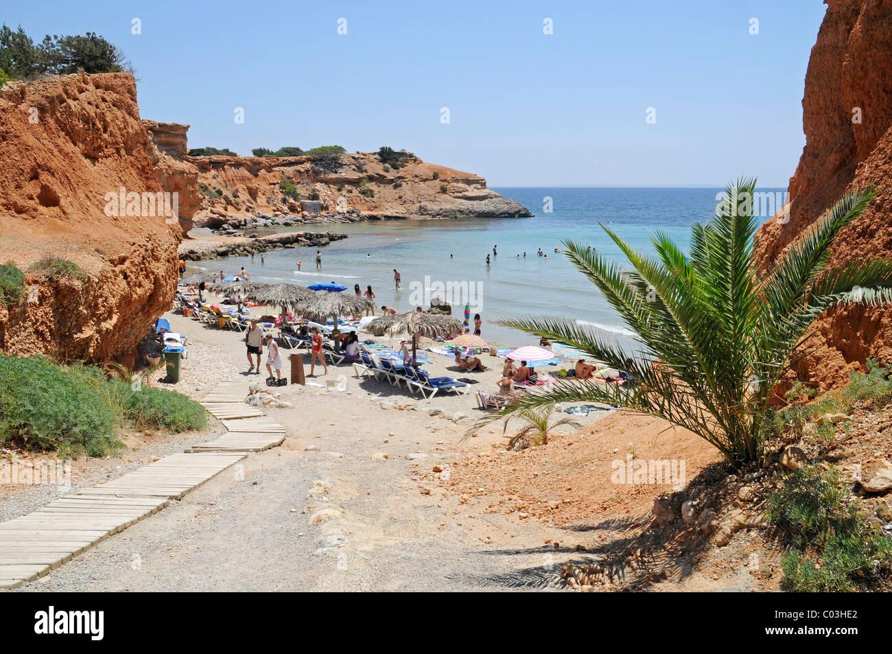 Cliffs, palm trees and bay, Sa Caleta, beach, Ibiza, Pityuses, Balearic Islands, Spain, Europe - Stock Image