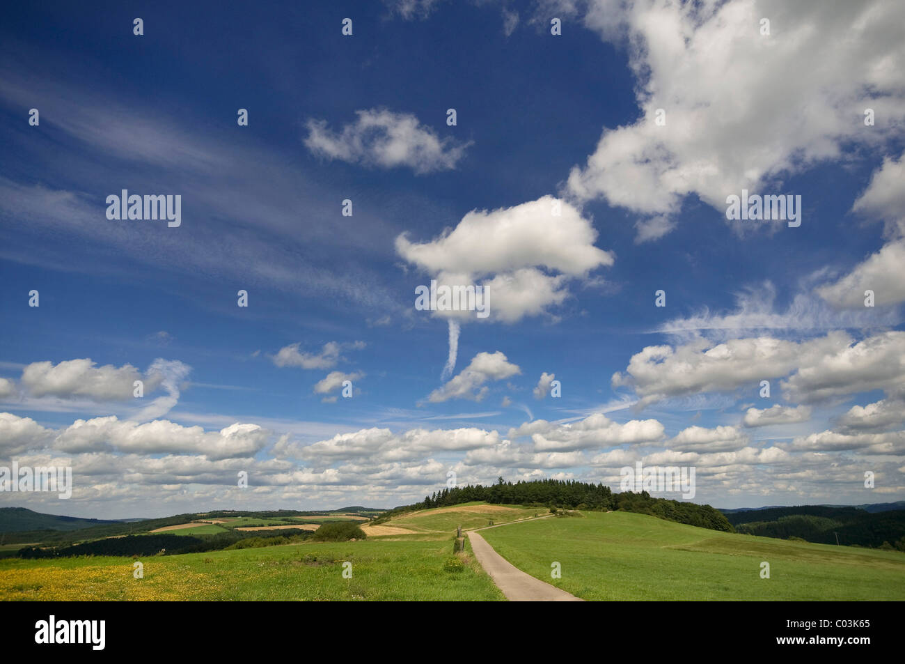 Landscape of meadows and forest, Eifel Nature Park, Germany, Europe - Stock Image