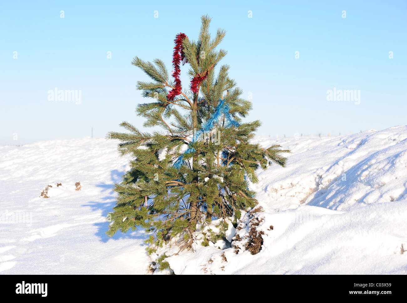 CHRISTMAS TREE TINSEL A169 PICKERING WHITBY ROAD NORTH YORKSHIRE ENGLAND A169 PICKERING TO WHITBY ROAD 21 December - Stock Image