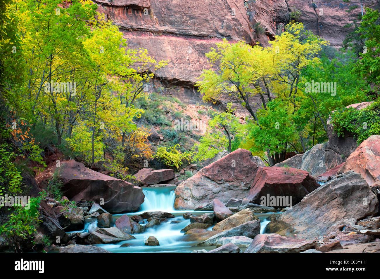 Fall colors and small falls along Virgin River. Zion National Park, Utah. - Stock Image