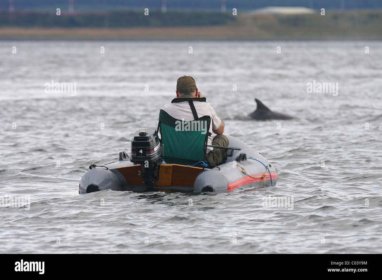 Man in an inflatable dinghy photographing Bottlenose dolphins (Tursiops truncatus), Moray Firth, Scotland, UK - Stock Image
