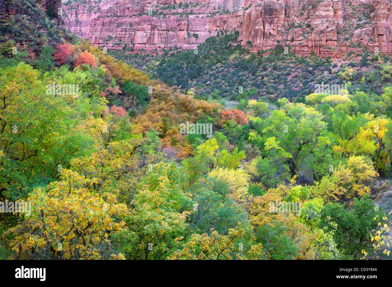 View of valley in Zion National Park with fall colors. Utah - Stock Image