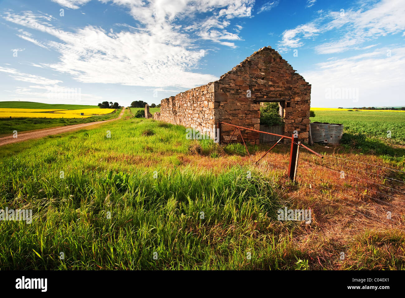 Mid North Canola Fields, South Australia - Stock Image