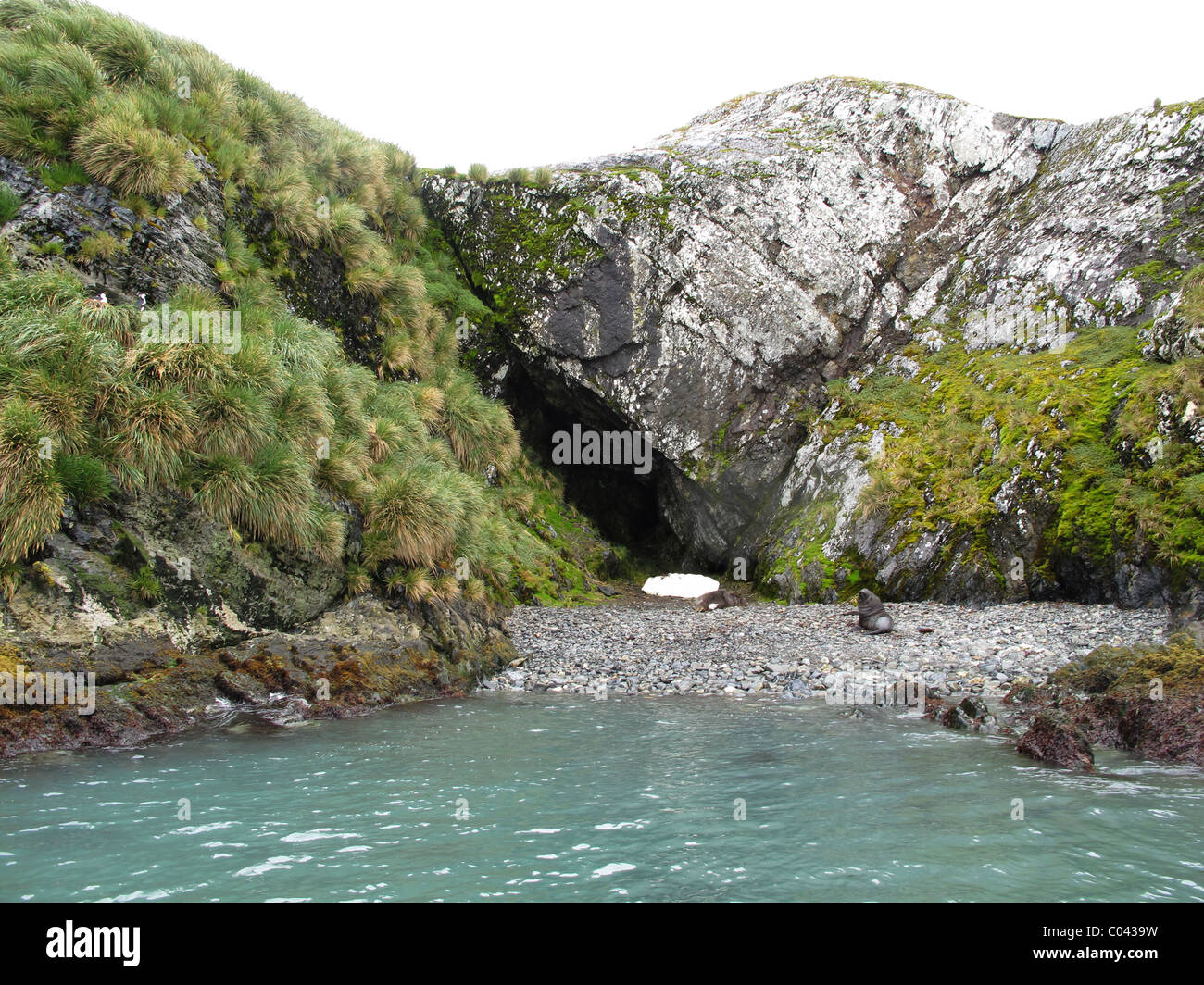 Most likely Shackletons cave, King Haakon Bay, South Georgia (southern coast) - Stock Image