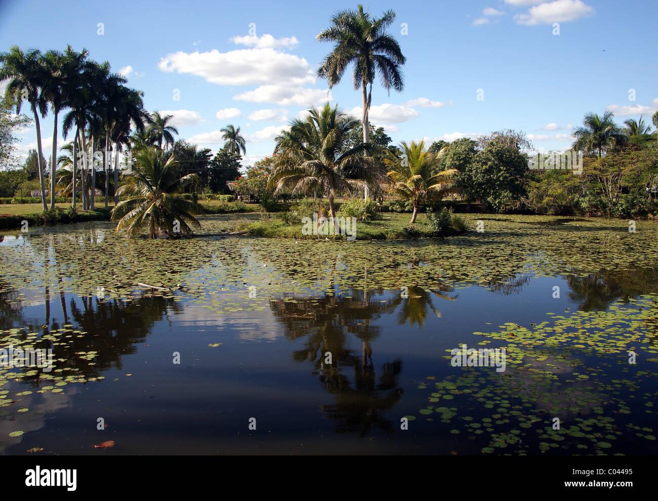 Crocodile farm cuba - Stock Image