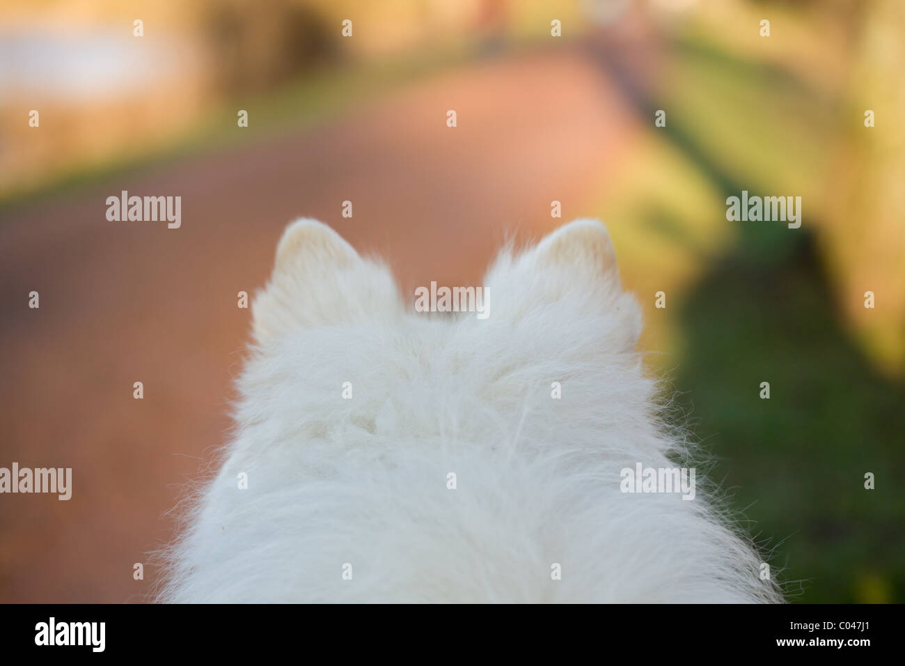 a walk in the park from a dog's viewpoint - Stock Image