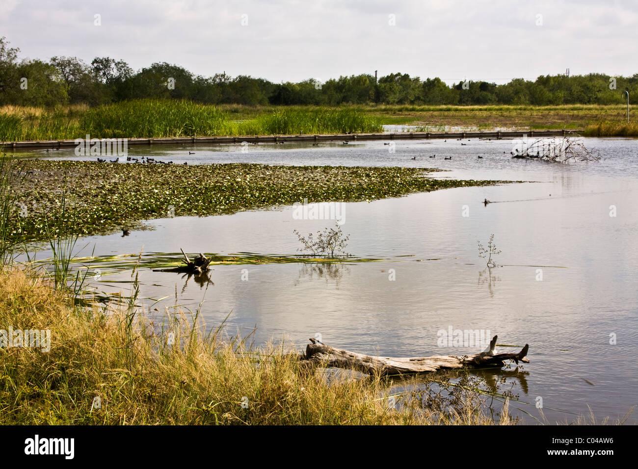 Estero Llano Grande State Park, Weslaco, Texas - Stock Image