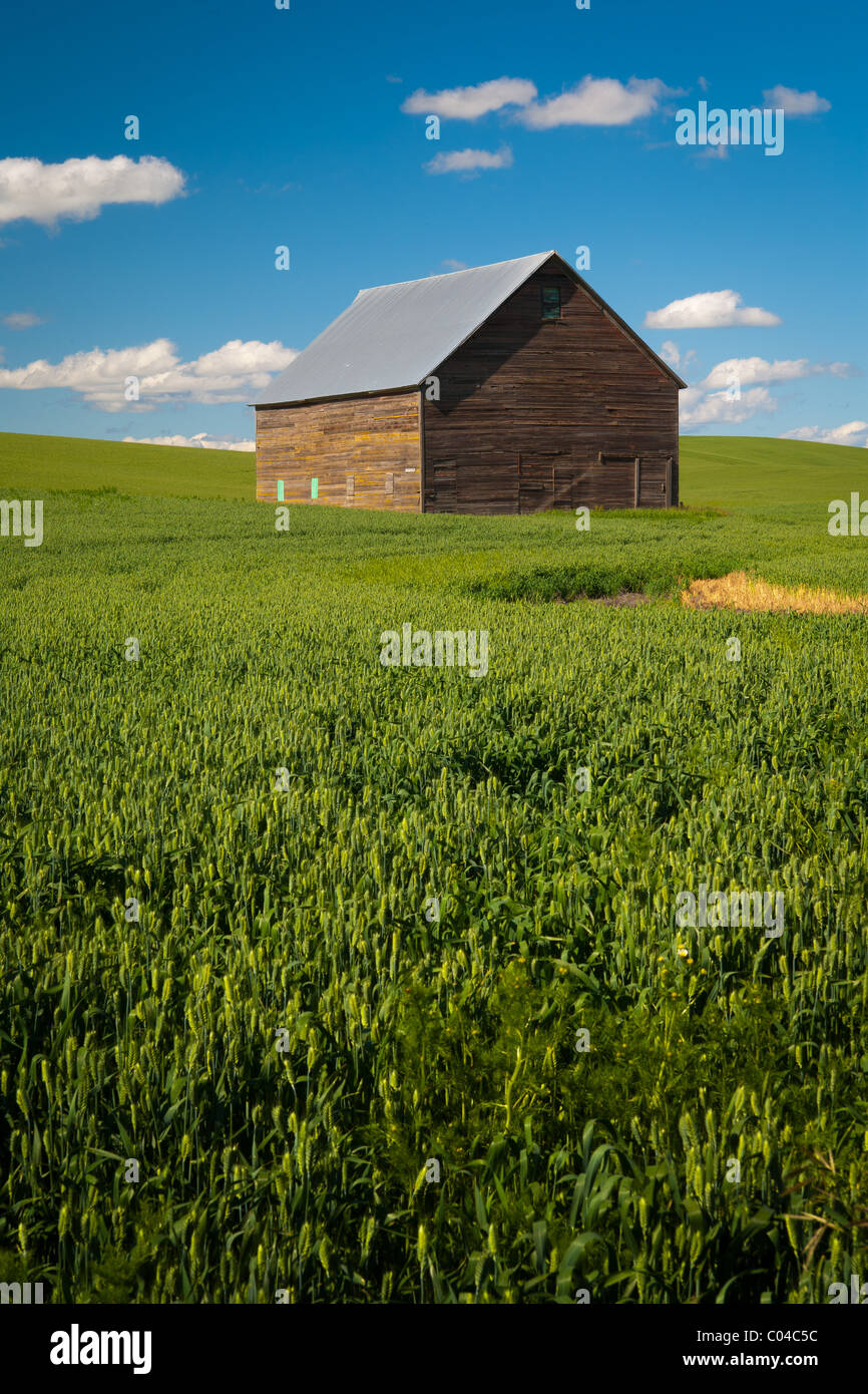 Farm bulding in the Palouse region of eastern Washington state, USA - Stock Image