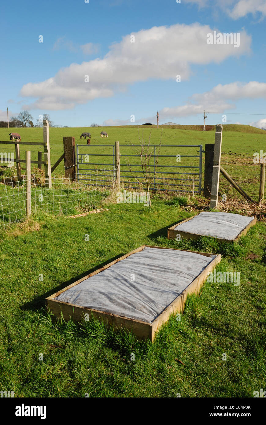 Raised vegetable beds covered in horticultural fleece. Lincolnshire, England. - Stock Image