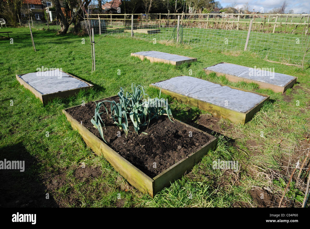 Raised vegetable beds in February, four of which are covered in horticultural fleece. Lincolnshire, England. - Stock Image