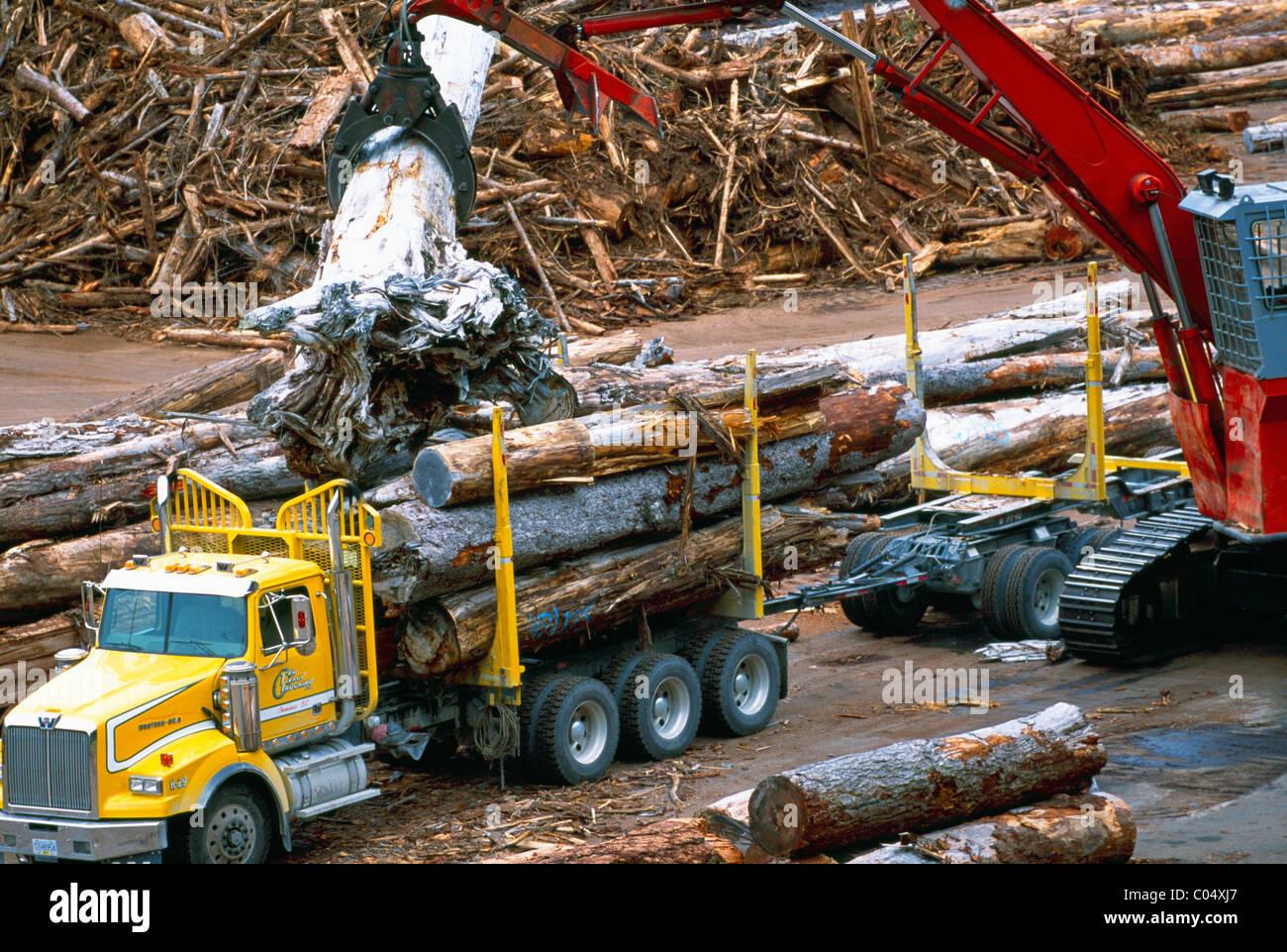 Unloading Poor Quality Logs at Beaver Cove Sort Yard, near Telegraph Cove, BC, Vancouver Island, British Columbia, - Stock Image
