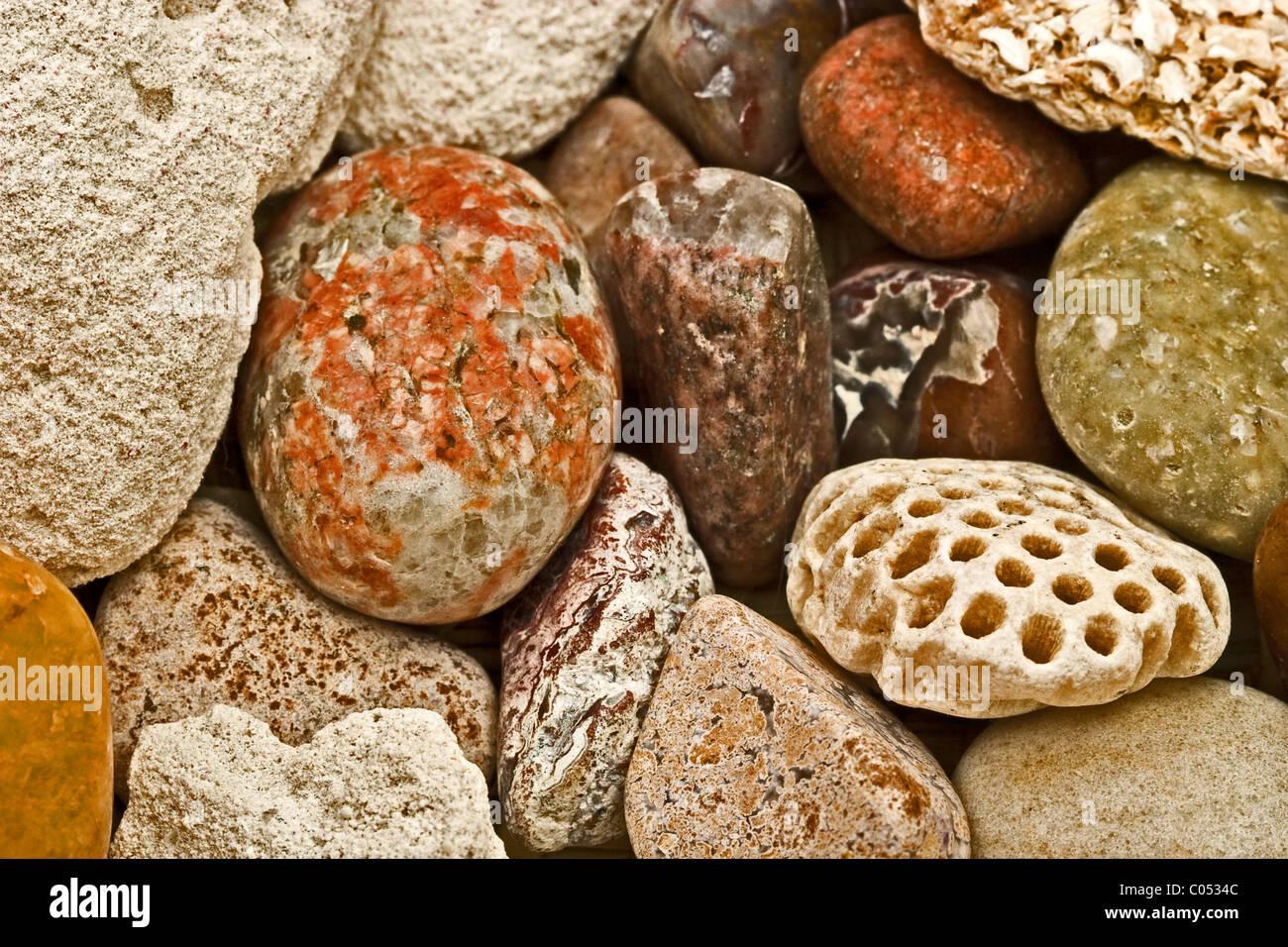 coquina sedimentary rock