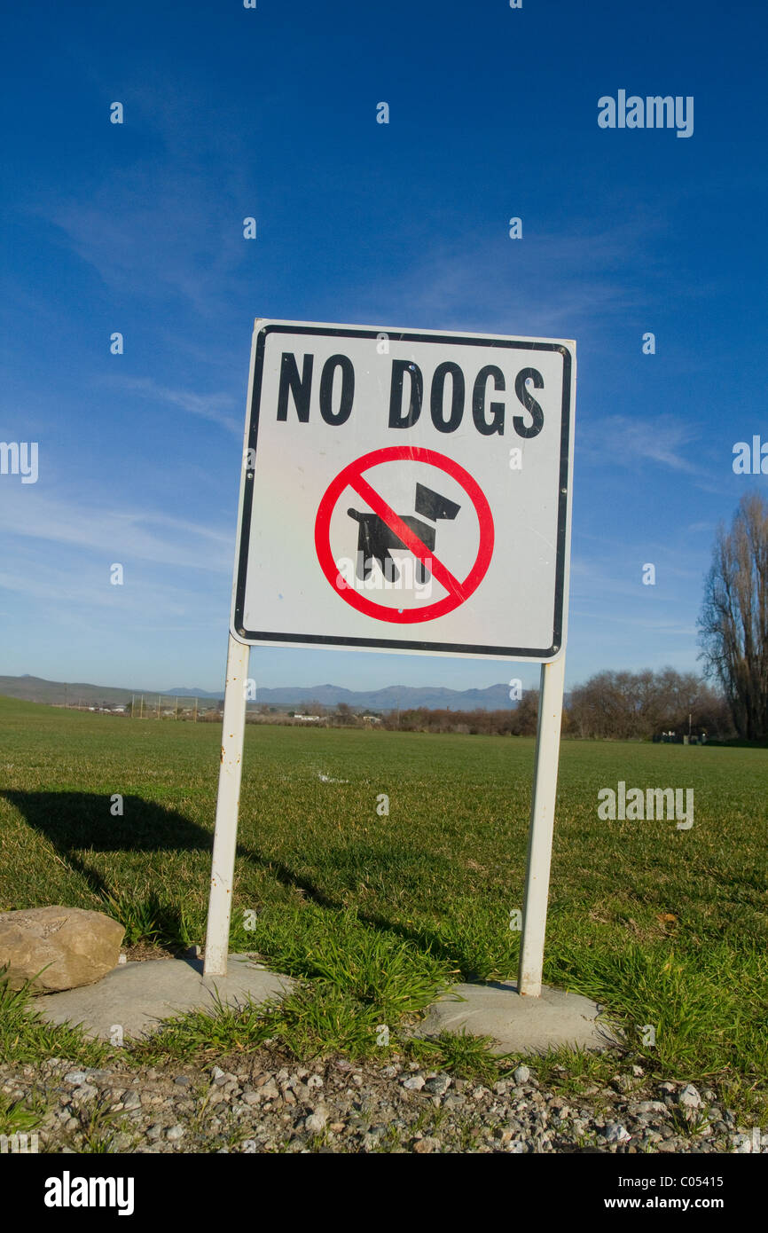 No Dogs Sign - Stock Image