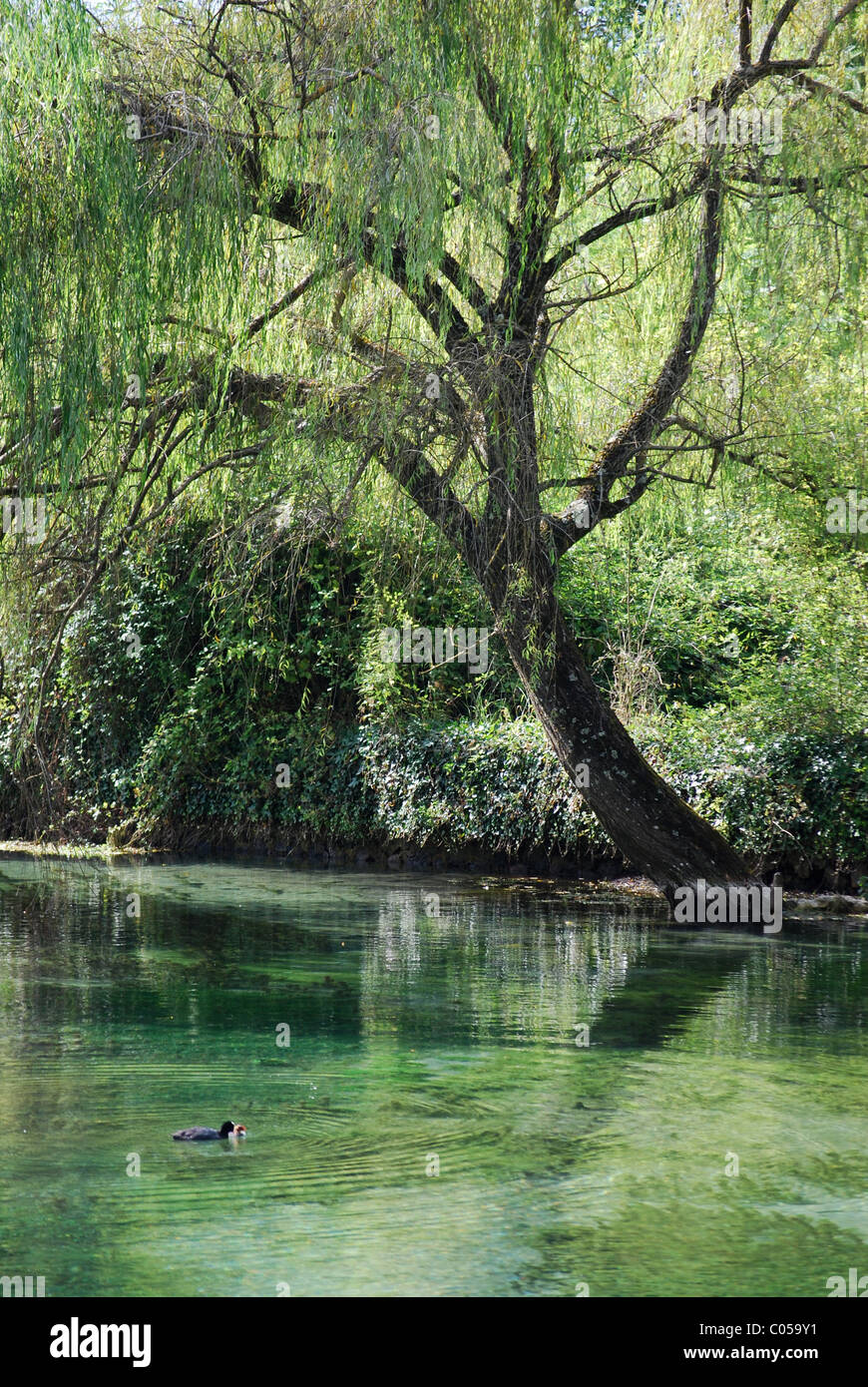 Lake of Posta Fibreno - Stock Image