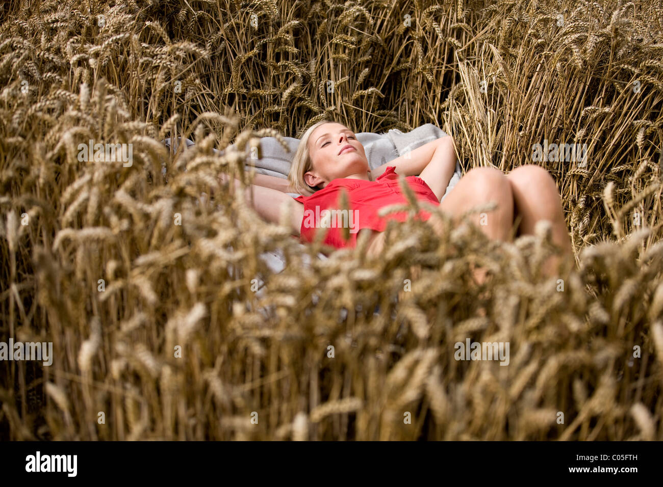 A woman lying in a wheatfield in summertime - Stock Image