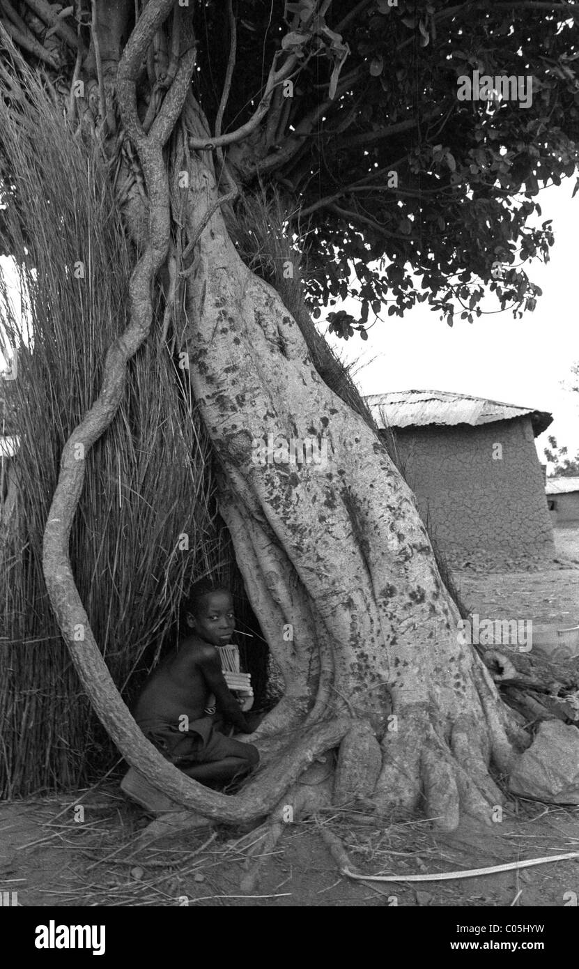 Boy playing in tree - Stock Image