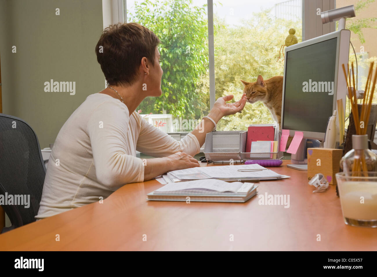 Woman at desk with cat in the house. - Stock Image