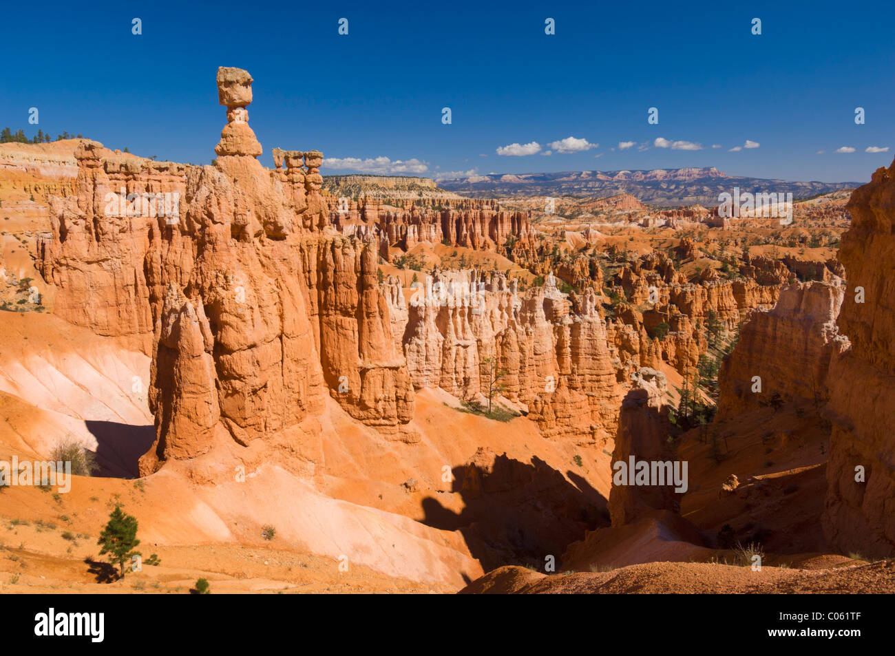 Thor's hammer and sandstone hoodoo's in Bryce canyon national park Utah United States of America USA - Stock Image