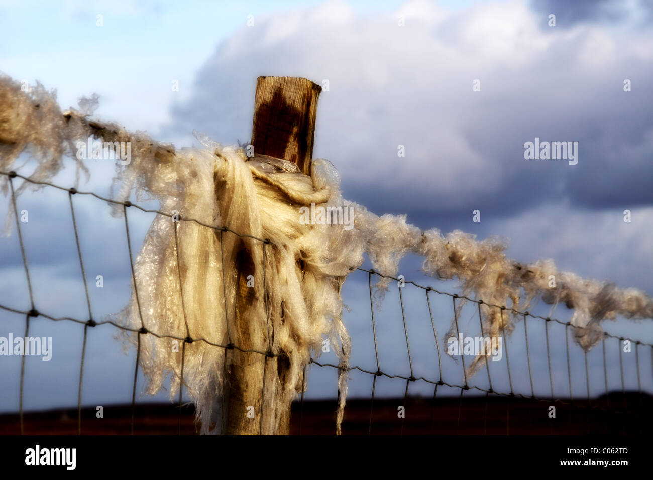 sheep wool wrapped around a fence post - Stock Image