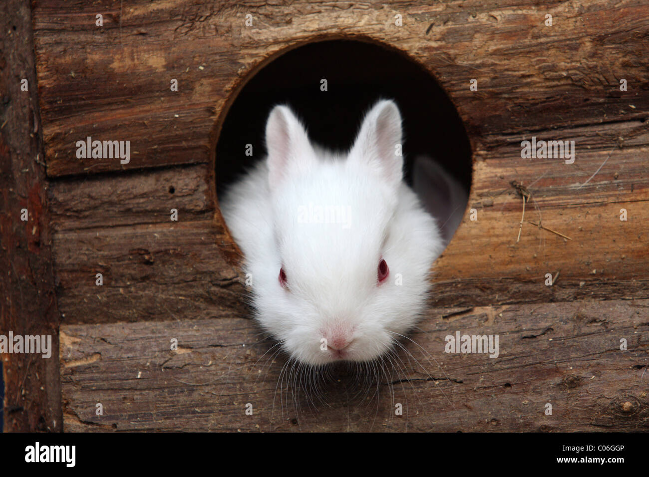 young rabbit - Stock Image