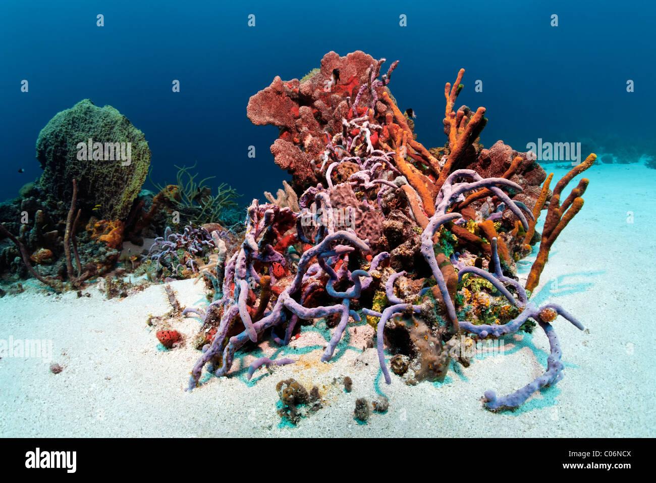 Reef block, coral reef, overgrown, multicolor, sorts, sponges, corals, sand ground, Little Tobago, Speyside, Trinidad - Stock Image