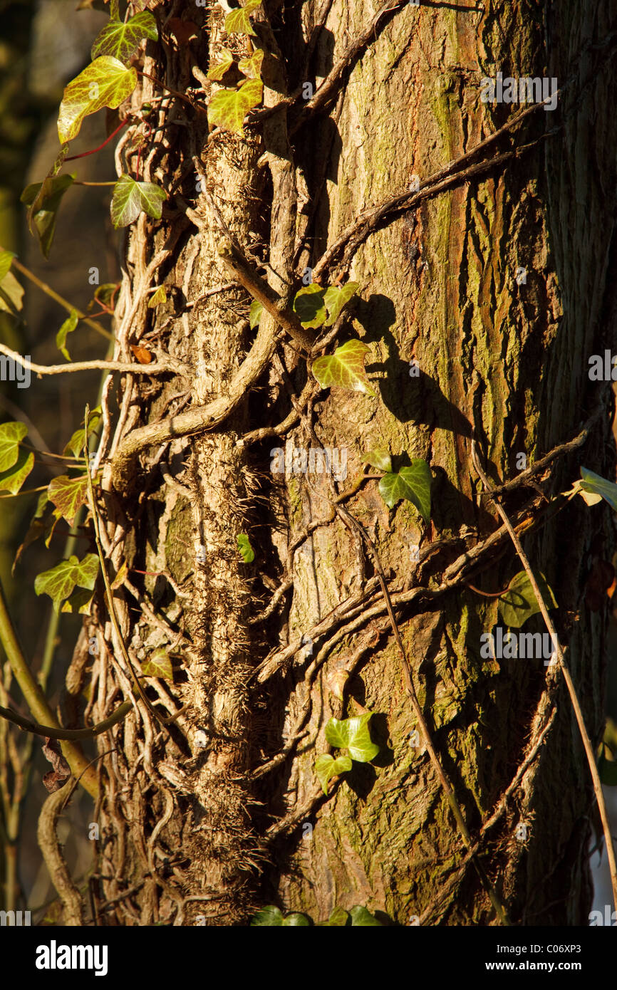 Close up of tree in Winter - Stock Image