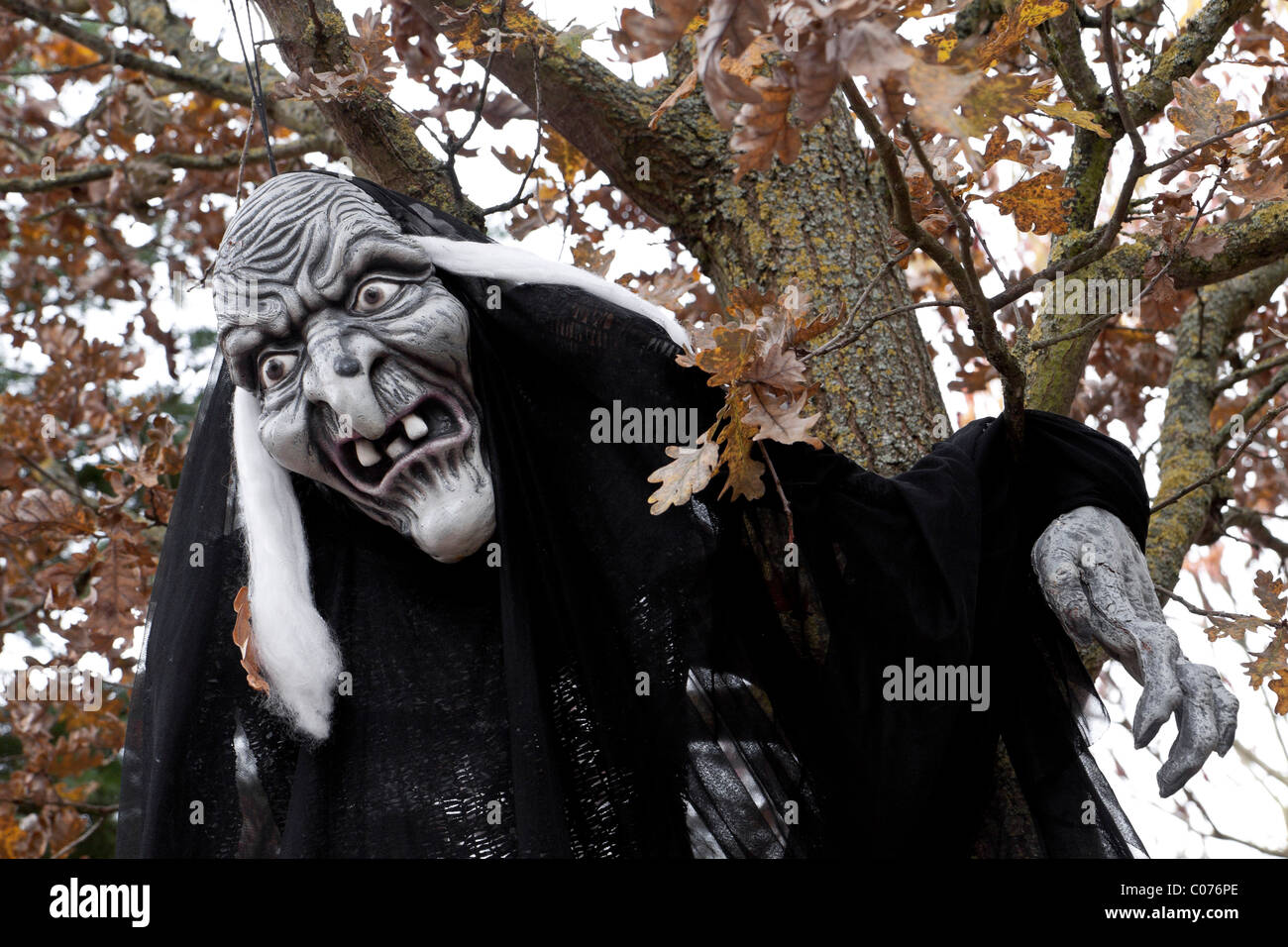 Witch figure, hanging from a tree, creepy, Walpurgis Night - Stock Image