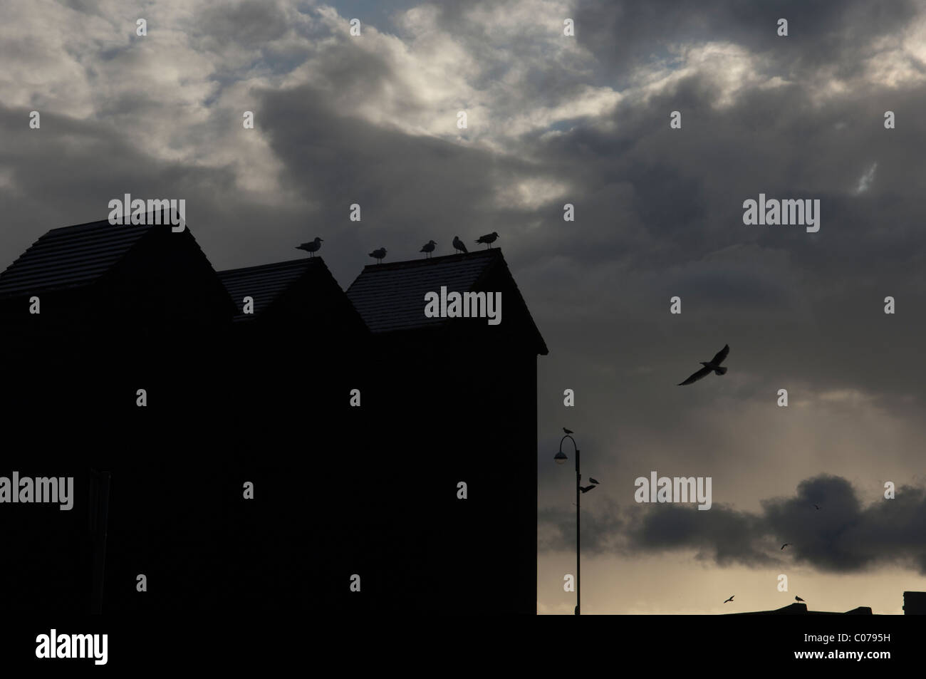 Herring Gulls perched on the top of the historic net huts in Hastings East Sussex England UK - Stock Image