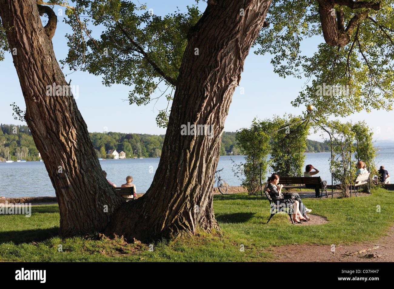 Lakeshore in Herschinger, Ammersee lake, Fuenfseenland or Five Lakes region, Upper Bavaria, Bavaria, Germany, Europe - Stock Image