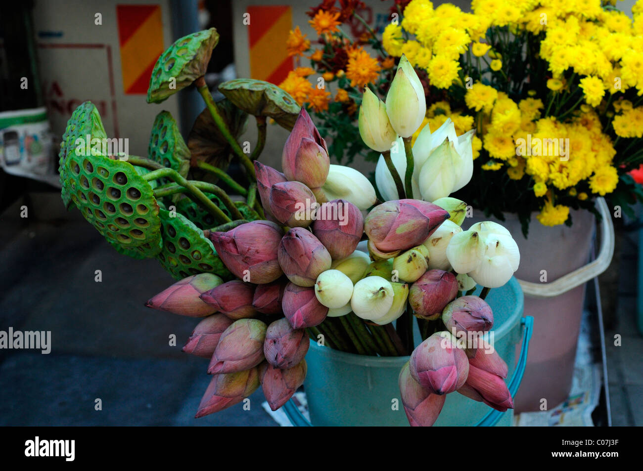 Fresh Lotus Flowers On Sale Outside Sri Mahamariamman Hindu Temple