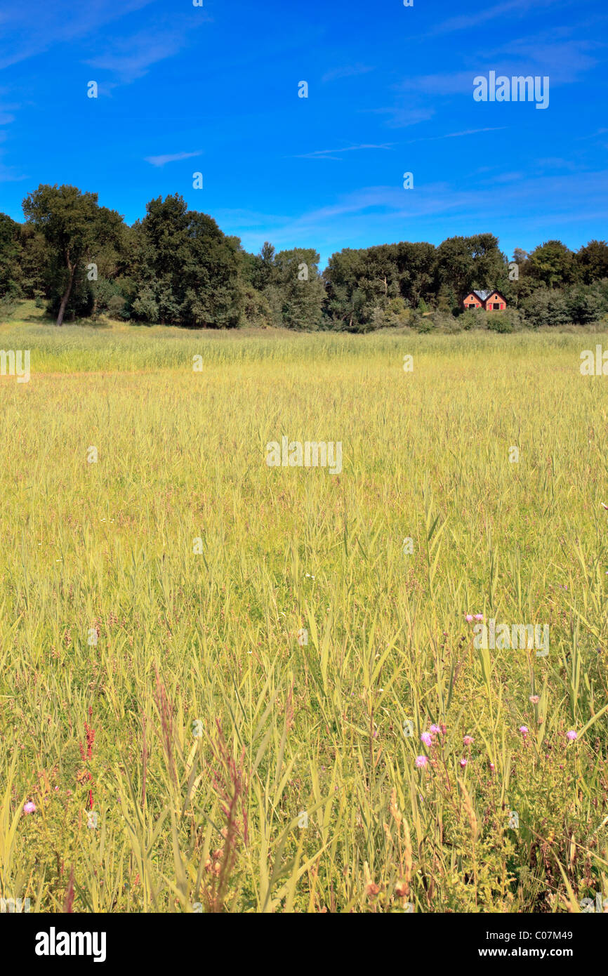 Meadow with trees and house on the horizon. Blue sky. - Stock Image