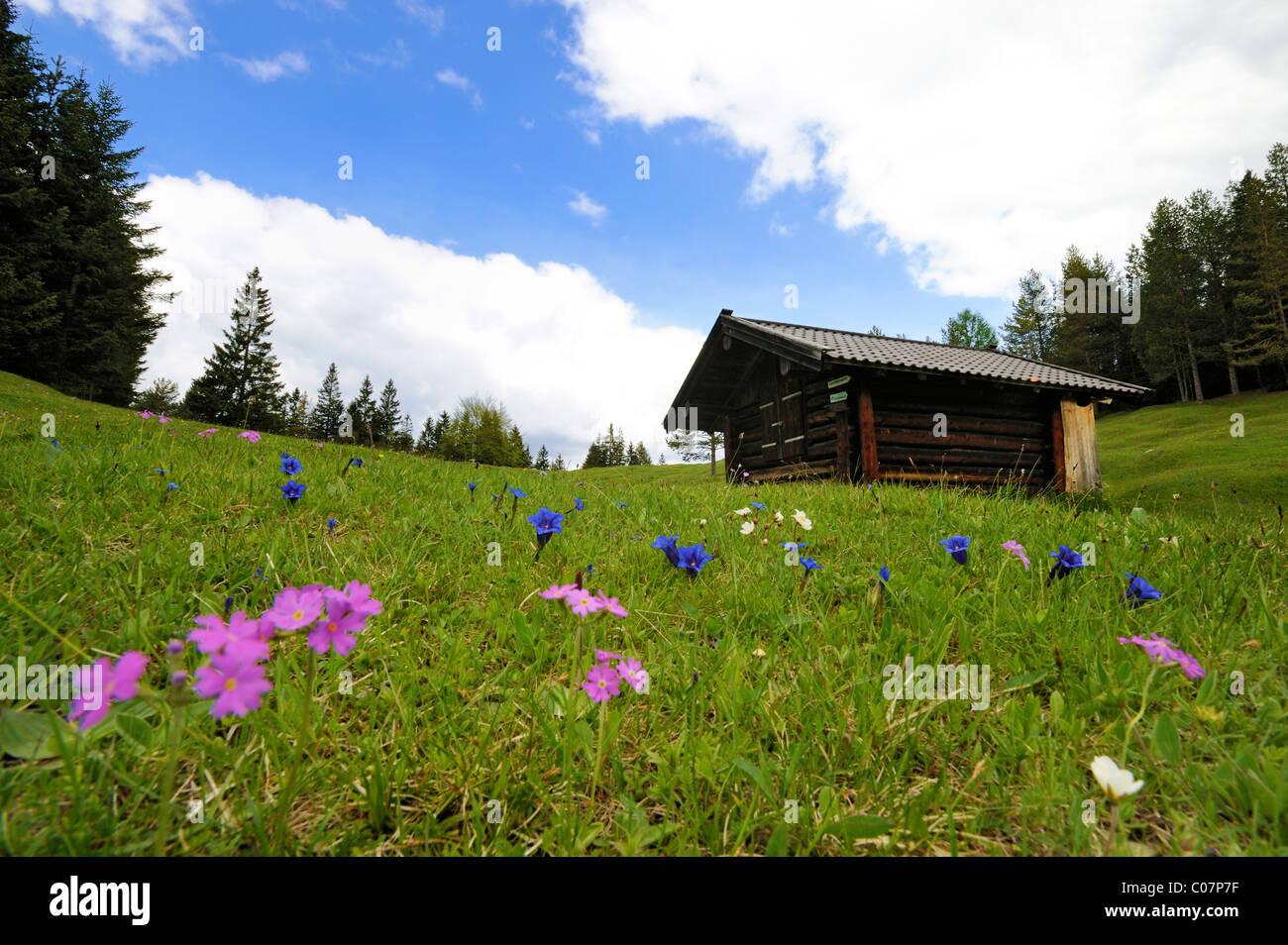 Hump meadows with hay barn at Kranzberg, Karwendelgebirge mountains, Mittenwald, Werdenfelser Land, Upper Bavaria, - Stock Image