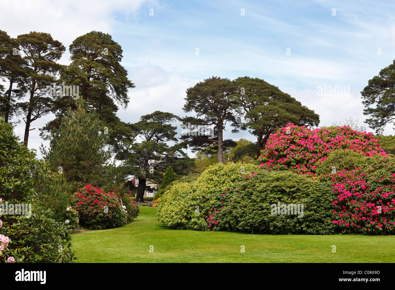 Muckross Gardens in spring, blossoming rhododendron bushes, Killarney National Park, County Kerry, Ireland, British - Stock Image