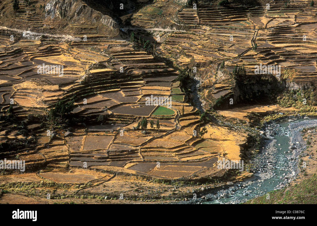 Terraced fields in the Colca canyon at an altitude of 3450 m, Peru, South America - Stock Image