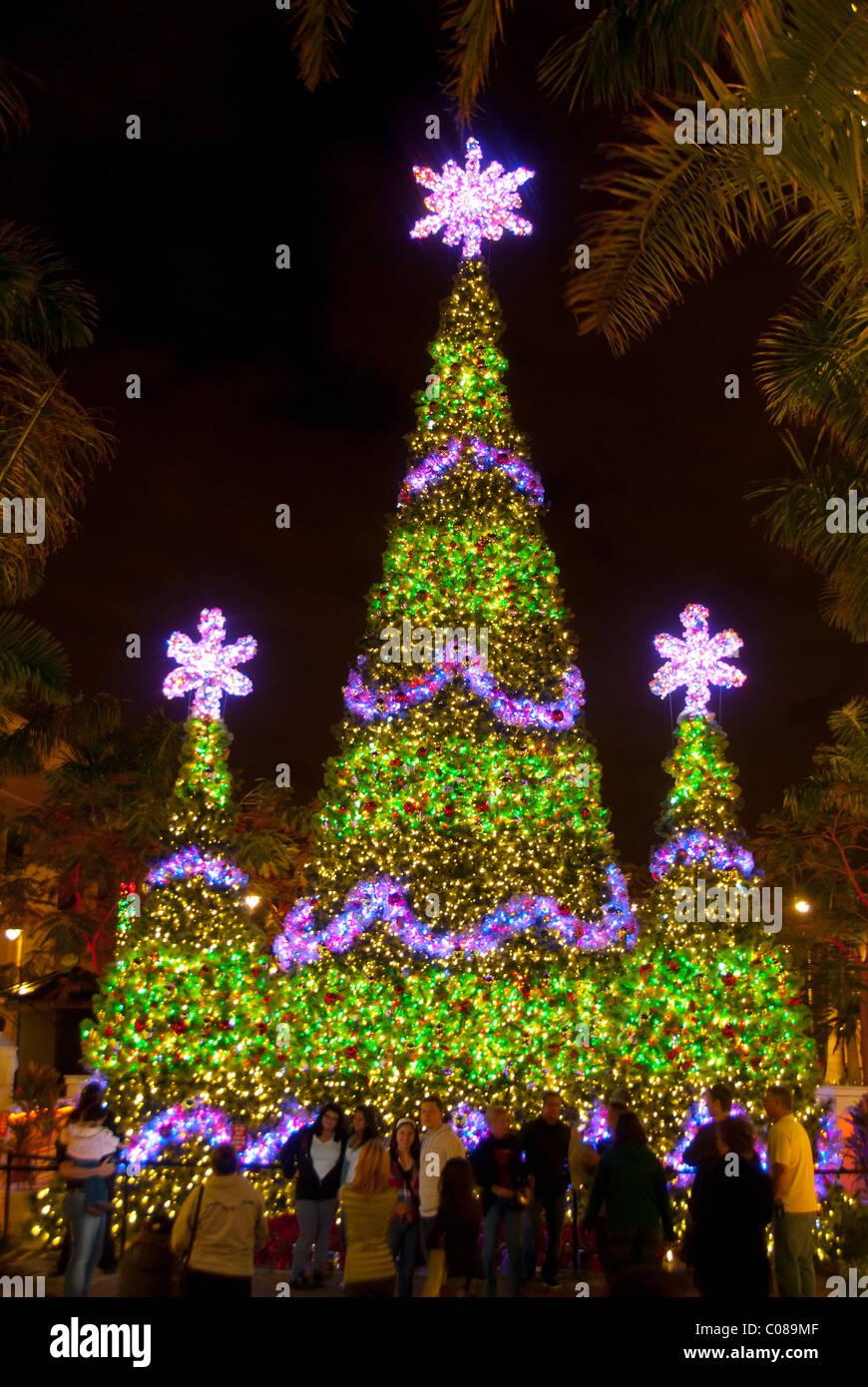 Large Outdoor Christmas Tree Stock Photos & Large Outdoor Christmas ...