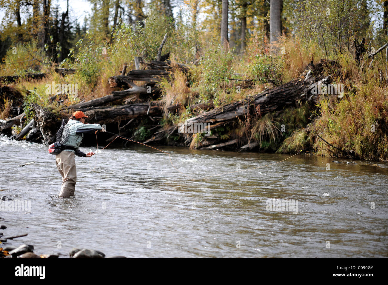 Woman flyfishing and casts for wild steelhead on Deep Creek, Kenai Peninsula, Southcentral Alaska, Autumn - Stock Image