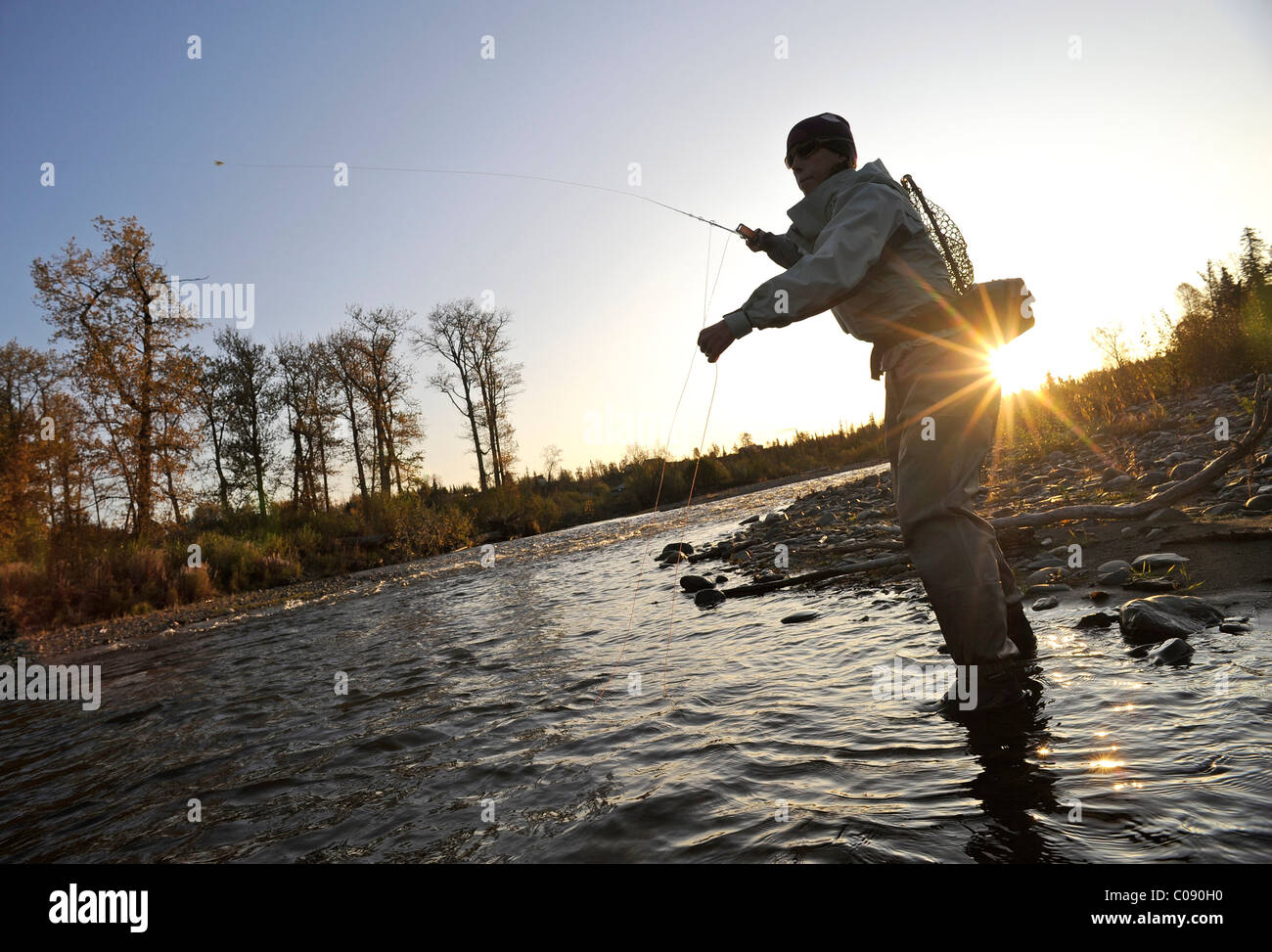 of a woman flyfishing and casts for wild steelhead on Deep Creek, Kenai Peninsula, Southcentral Alaska, Autumn - Stock Image
