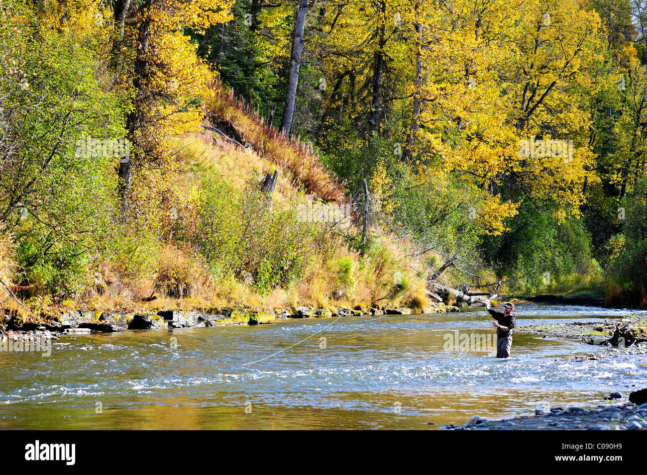 Flyfisherman casts for wild Steelhead on Deep Creek, Kenai Peninsula, Southcentral Alaska, Autumn - Stock Image