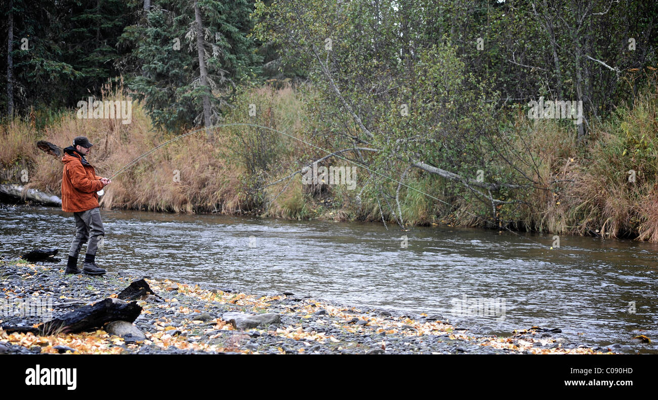 Fly fisherman in a wild Steelhead on Deep Creek, Kenai Peninsula, Southcentral Alaska, Autumn - Stock Image