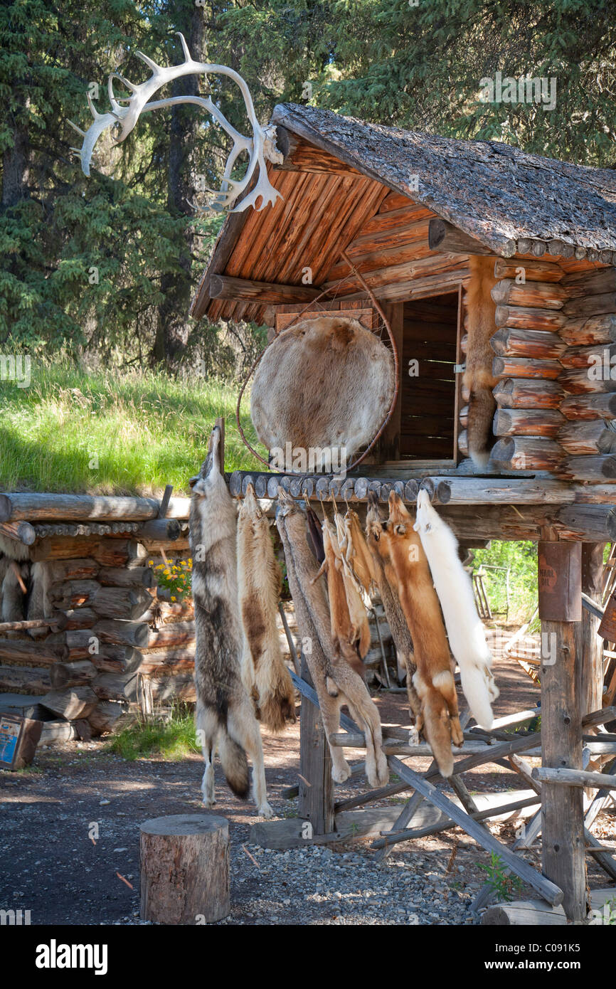 Furs hang from log cabin cache at the Chena Indian village on the Riverboat Discovery tour,   Fairbanks, Interior - Stock Image
