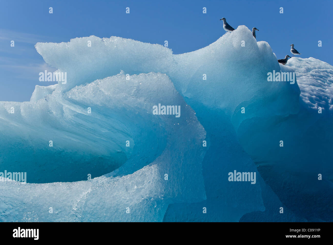Close up of an iceberg in Stephens Passage with gulls perched on top, Inside Passage, Southeast Alaska, Summer - Stock Image