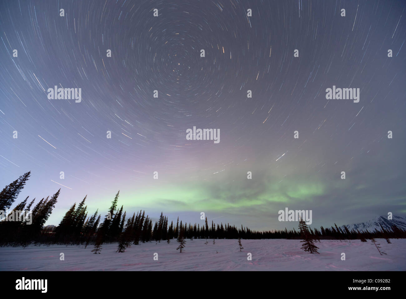 View of Northern Lights and star trails above spruce trees in Broad Pass, Southcentral Alaska, Winter - Stock Image