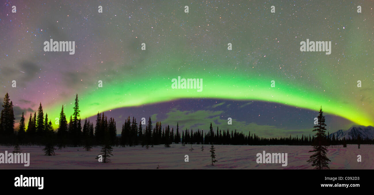 View of Northern Lights and spruce trees in Broad Pass, Southcentral Alaska, Winter - Stock Image