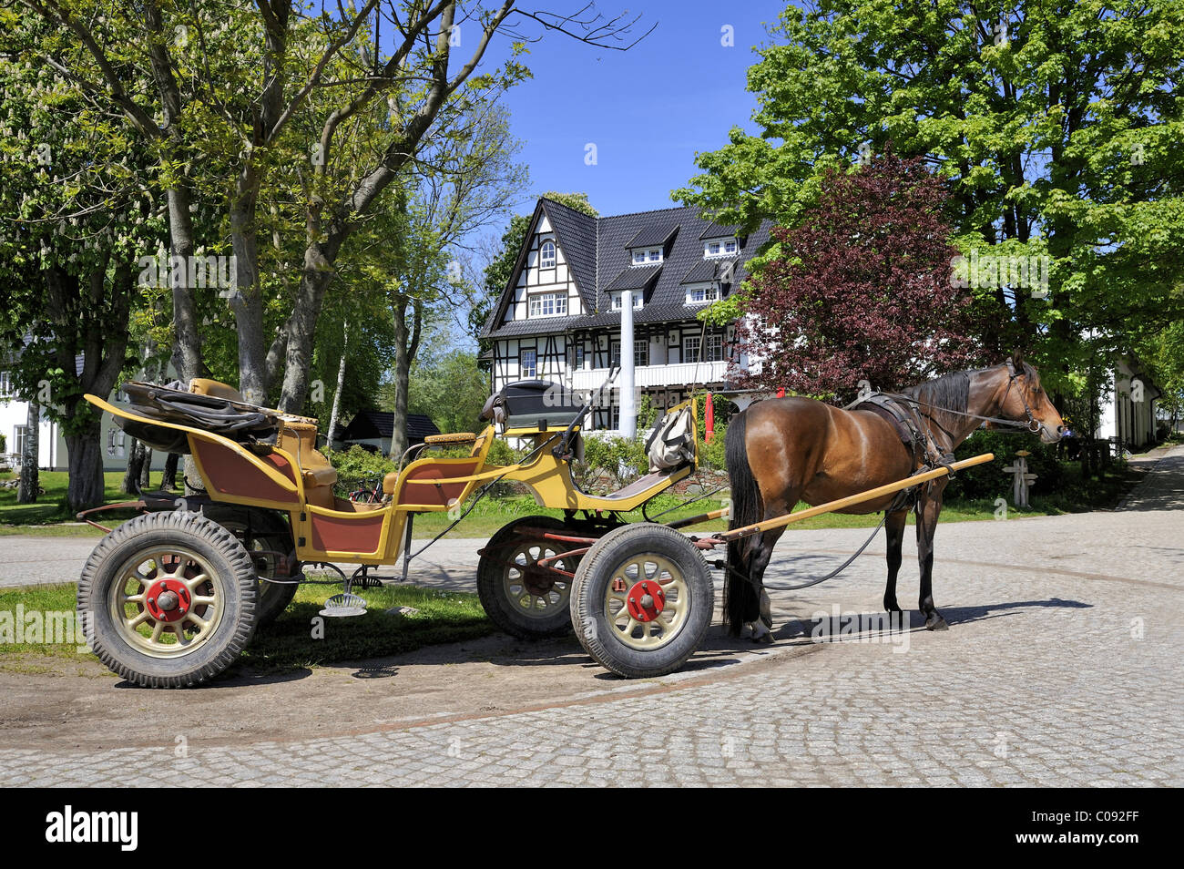 Horse-drawn carriage, public transport on the car-free island, Hiddensee Island, district of Ruegen - Stock Image