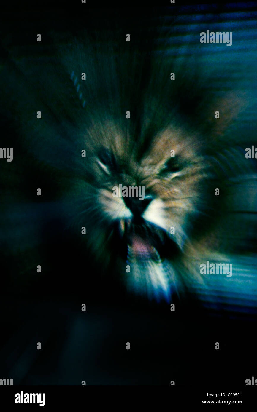 Scary abstract image of a Lion about to attack - Stock Image